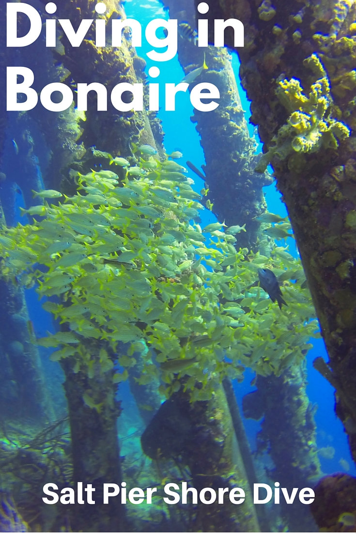 Bonaire Salt Pier: The Feeling of Diving in a Cathedral // Did you ever imagine diving in a cathedral? Sounds funny and impossible, right? That thought crossed my mind as we were nearing the pillars of the Salt Pier, one of Bonaire's most notorious shore dive sites. As I looked up, the sun shining through schools of fish, rays of light piercing through the sea – I was in a serene cathedral surrounded by sunny illuminations and colorful mosaics.