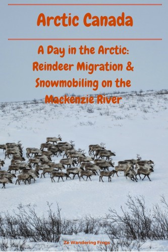 Arctic Canada Reindeers & Snowmobiling